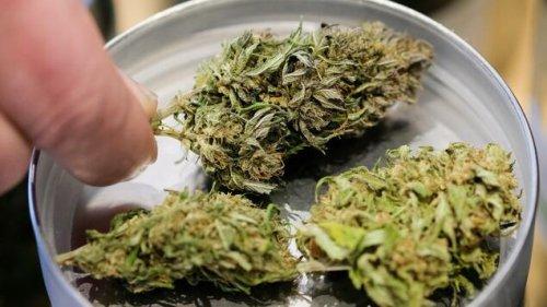 Luxemburg erlaubt Cannabisanbau für Eigenbedarf