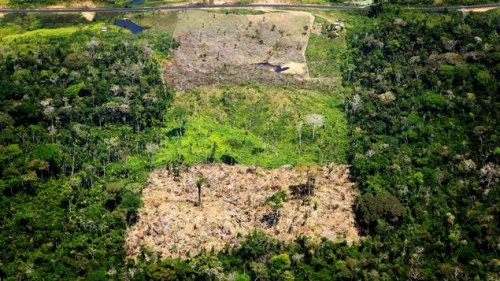 EU-Importe verursachen Tropenwald-Abholzung in großem Ausmaß