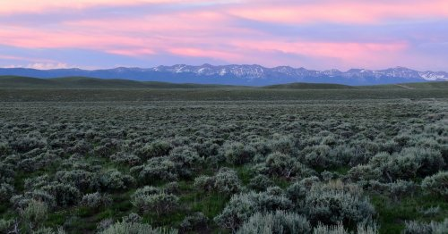 The American West's sagebrush sea is rapidly vanishing