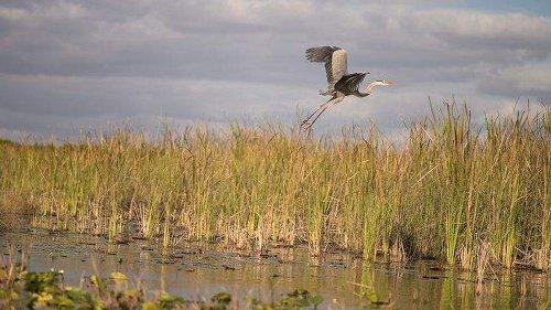 Go big to restore the Everglades   Column