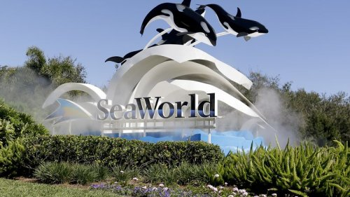 SeaWorld, parent company of Busch Gardens, reports steady improvement in profits