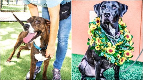 Tampa Bay area pets looking for forever homes