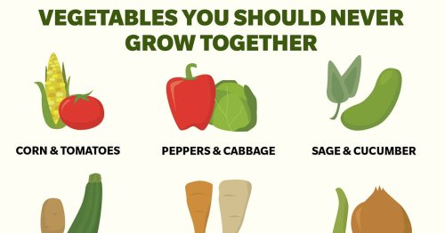 This Graphic Shows You 20 Vegetables You Should Never Grow Together