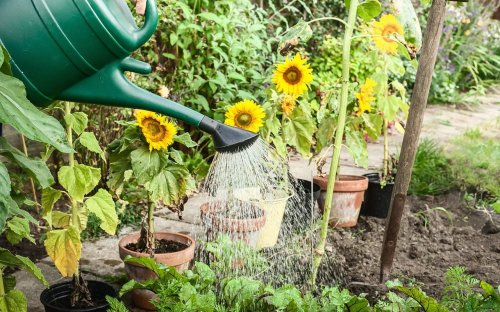 People Are Putting Epsom Salt in Their Gardens—Here's Why