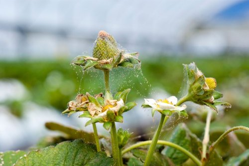 What Are Spider Mites and How Do You Get Rid of Them?