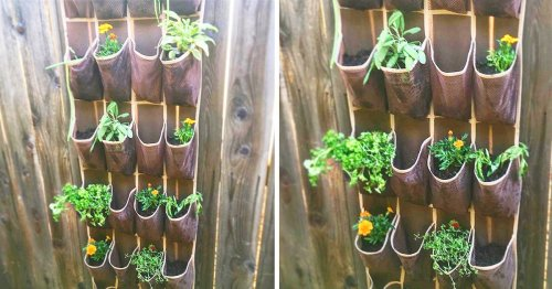 You Can DIY a Vertical Hanging Garden Using a Shoe Organizer—Here's How