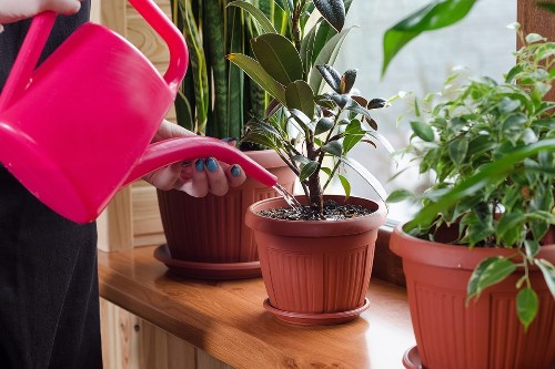 15 Low-Light Houseplants That Thrive in Near Darkness