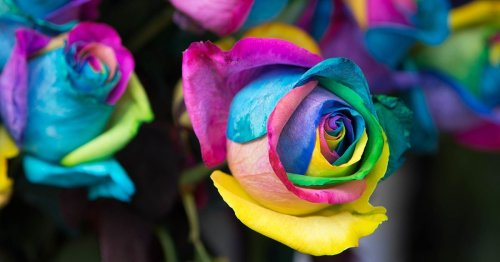 Kaleidoscope Roses Will Turn ANY Arrangement into a Colorful Rainbow