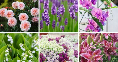 9 of the Best-Smelling Flowers That Belong in Your Garden