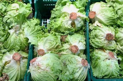 If You See Red Stuff on Your Lettuce, This Is What It Means