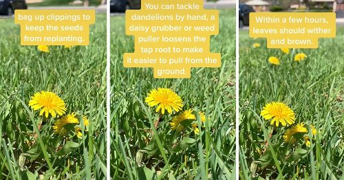 This Video Shows You EXACTLY How to Get Rid of Pesky Dandelions