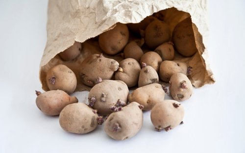 Can You Use Sprouted Potatoes?