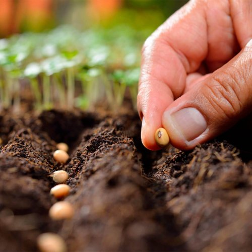 Planting Calendar: When to Plant These Popular Vegetables