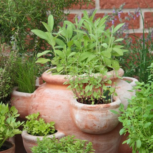 How to Successfully Grow Your Kitchen Herb Garden