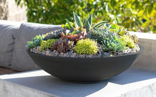 16 Cute and Functional Succulent Pots You Need in Your Home