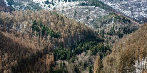 Mehr Milliarden für den Forst