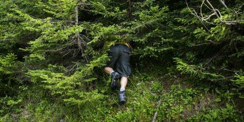 Lasst die Maronen im Wald
