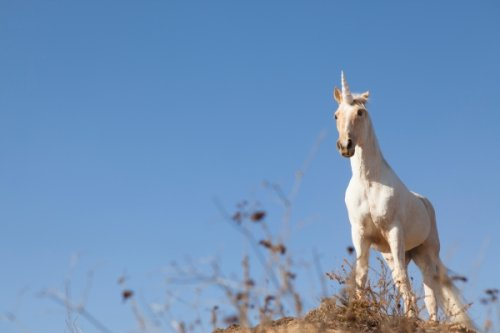Unicorns: A tale of two continents