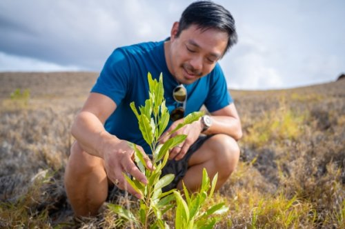 Terraformation gets $30M to fight climate change with rapid reforesting