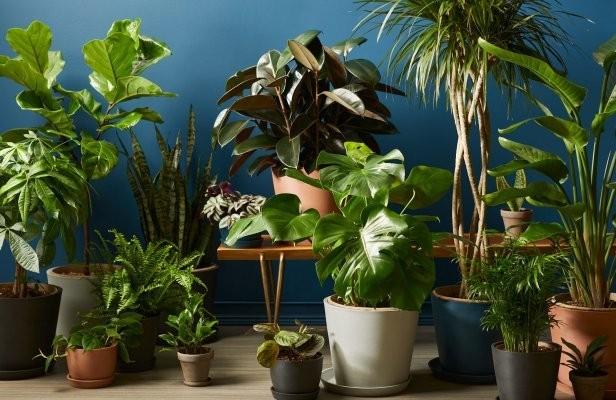 Online garden shop Bloomscape raises $15M Series B, acquires plant care app Vera