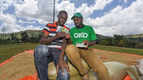 OKO raises $1.2 million to bring insurance to smallholder farmers across Africa