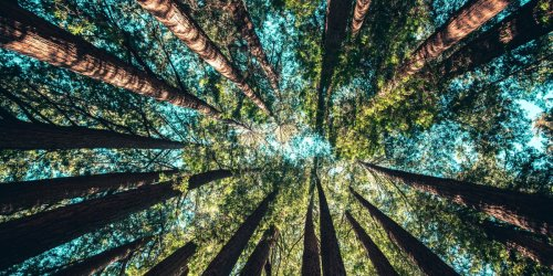 """""""A Trillion Trees"""" is a great idea—that could become a dangerous climate distraction"""
