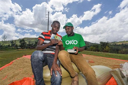 OKO raises $1.2 million to bring innovative insurance closer to farmers in Africa
