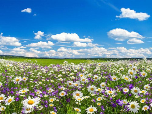 Best Zoom backgrounds for spring featuring fields abloom and seasonal views