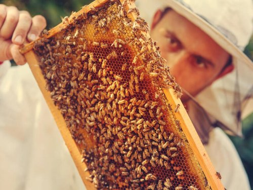 How SAS uses IoT and analytics to help save honey bees, the world's No. 1 food crop pollinator