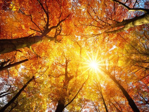 Photos: Turn a new leaf with the best Zoom backgrounds for fall