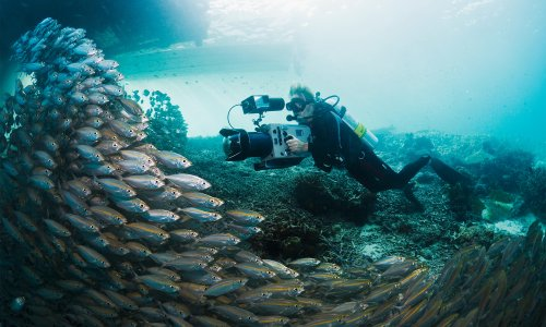 12 films and series that will give you an up-close look at climate change — and some solutions
