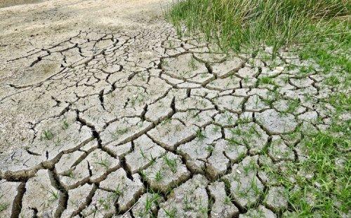 Sobregiro ecológico: la humanidad ya consumió su cuota de recursos naturales en lo que va de 2021