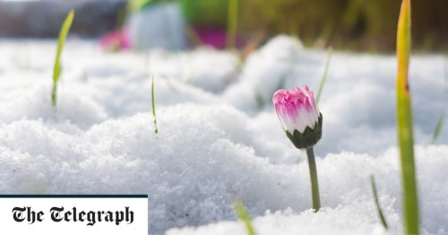 How to revive snow-damaged plants in just 10 minutes