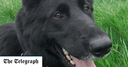 Tributes paid to police dog killed in the line of duty