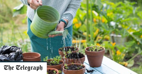 How to grow fruit and vegetables in pots: the best containers to buy, when to sow and expert tips