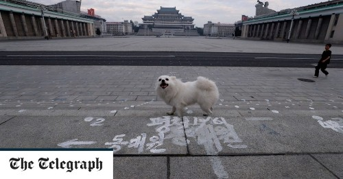 Dog hide tax starting to bite for North Koreans
