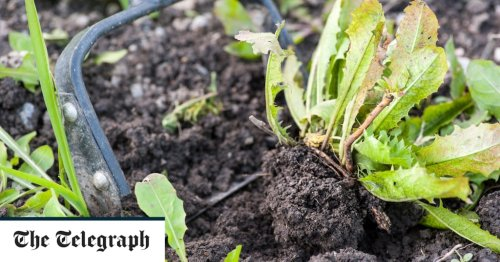 How to clear a weedy plot and prune roses - top tips for your allotment