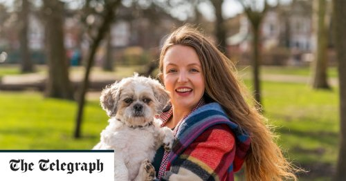 From a life-saving collie to therapy schnoodles, meet Britain's most extraordinary dogs