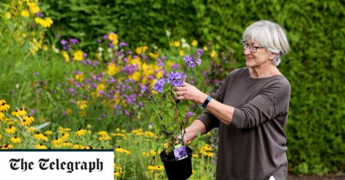 Goodbye Thorny Problems, from gardening's favourite agony aunt