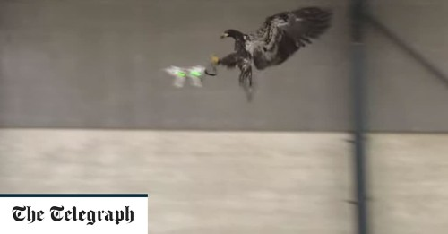 Dutch police are fighting drones with eagles