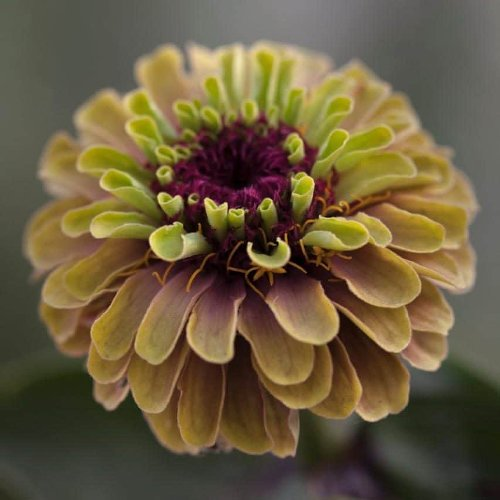 Best colourful summer annuals to grow from seed