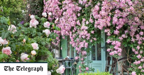 How to plant climbers: A beginner's guide to planting clematis, roses and more