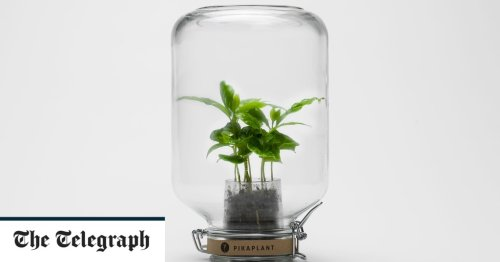 PikaPlant: maintenance-free plants to cheer up your workplace