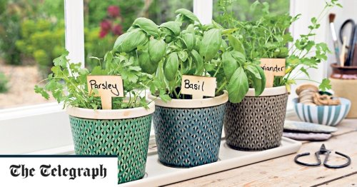 How to grow herbs all year round for under a tenner