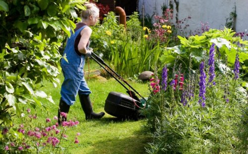 Save bees by holding back on the mowing, gardeners urged