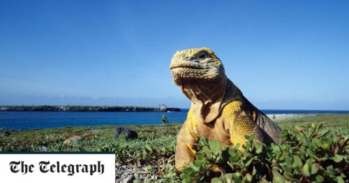 The tale of Prince Phillip's 1964 visit to the Galápagos