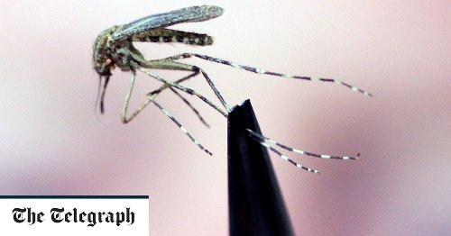 El Salvador becomes first Central American country to be declared free of malaria