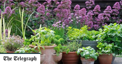How to plant your pots so your flowers bloom all year