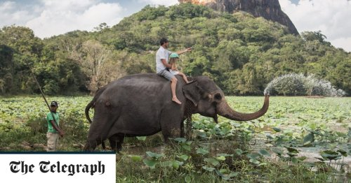 Government to ban advertising of 'cruel' elephant ride holidays