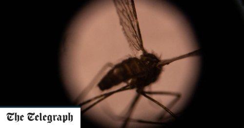 Drug-resistent malaria gains ground in Africa